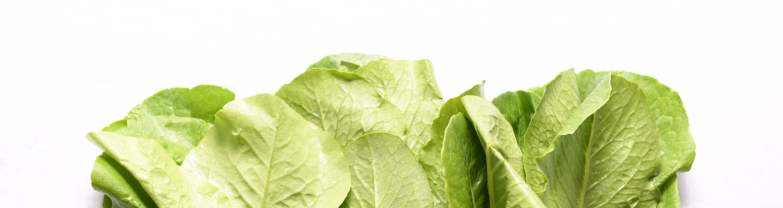 Lettuce header